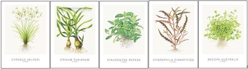 Tropica art cards set 1