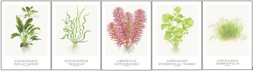 Tropica art cards set 2